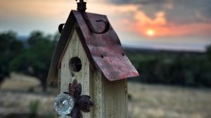 The Empty Nest: Facing the Challenges & Reclaiming Space – Living Peace Tuesday Tip